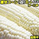 とうもろこし ピュアホワイト 送料無料 生で食べれる 白いとうもろこし 糖度18〜19度 香川 三豊産 トウモロコシ 2L-L…