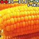 とうもろこし 送料無料 生で食べれる おおもの スイートコーン 香川 三豊産 トウモロコシ 2L〜3Lサイズ 8-9本入り 父…