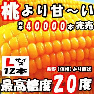 とうもろこし 県外不出 桃より甘い 生で食べれるとうもろこし めぐみ 長野産 Lサイズ 12本 3.6〜4.5kg