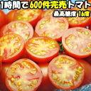 トマト フルーツトマト 高糖度 送料無料 最高16度 ごくとま 1kg バラ詰 約40〜50個 宮崎 わそう農園 直送 ななつ星in…