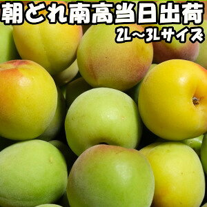 奈良柳澤果樹園南高梅約10kg2L〜3Lサイズ