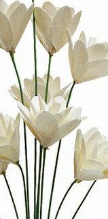 ツェルニー 12輪 ホワイト DJ039089-001【花資材】【花材】【ドライ素材】【ハンドメイド造花】