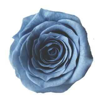 PV 863 ベベ 20 Ashley blue