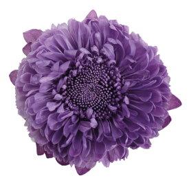 アスター バイオレット(6輪入り)【花資材】【花材】【プリザーブドフラワー】【プリザーブドローズ】【フロールエバー】