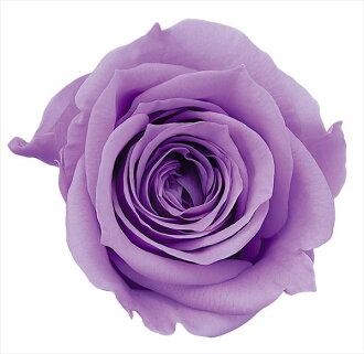 Nine Rose Mimi sweet lilac