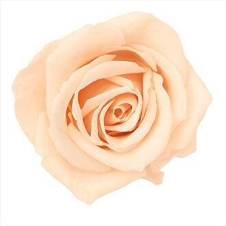 Nine Rose Mimi creamy peach
