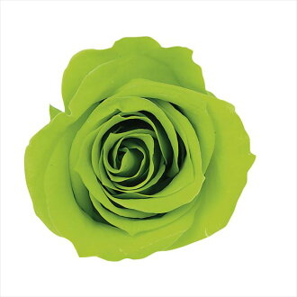 Rose Mimi nine light green