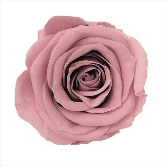 Rose Mimi nine mauve pink