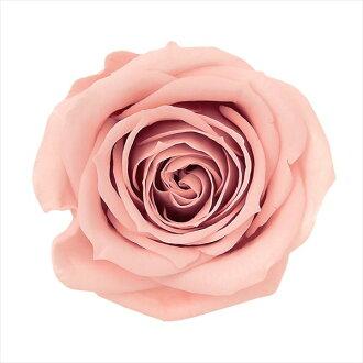 Rose Mimi nine Marron pink