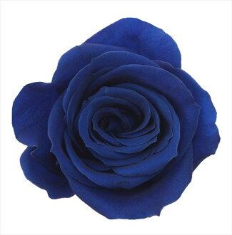 Rose, Izumi nine indigo blue