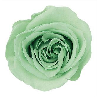 Rose Mimi nine honey green