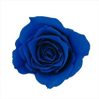 Rose Mimi nine indigo blue