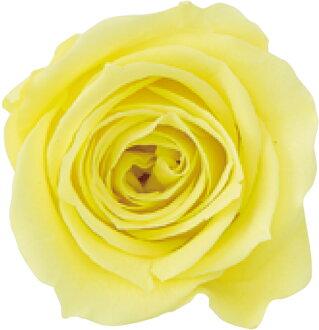 Rose, Izumi nine lemon fizz