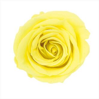 Rose Mimi nine lemon fizz