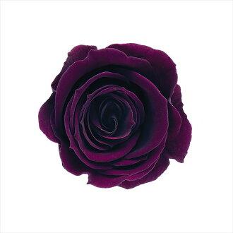 Rose, Izumi nine Bordeaux