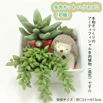 A many meat kit hedgehog (the beginner's class) (entering one set)