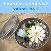 ◎◎ マグネットケースプリザジニアキットシロ & baby blue (entering 1 コ)