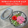 ◎◎ Magnet case pre-the zinnia kit macaroon pink & red (entering 1 コ)