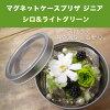 ◎◎ マグネットケースプリザジニアキットシロ & light green (entering 1 コ)