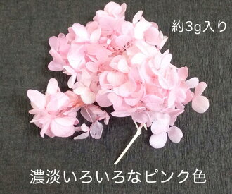 ◎◎(per person to three) hydrangea subdivision gradation pink (entering approximately 3 g)