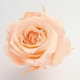 ローズ いずみ約3.5〜4.5cmφ クリーミーピーチ (9輪入り) 【楽天ランキング入り!】【プリザーブドフラワー】【プリザーブドローズ】【花資材】【花材】【Preserving】【大地農園】