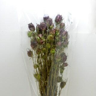 ◎◎ フーセンポピー フレッシュグリーン(約30~45g) 【花資材】【花材】【ハーバリウム】【ドライフラワー】【ドライ】【dry】【大地農園】