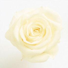 ローズ いずみ約3.5〜4.5cmφ アンティックホワイト (9輪入り) 【プリザーブドフラワー】【プリザーブドローズ】【花資材】【花材】【Preserving】【大地農園】