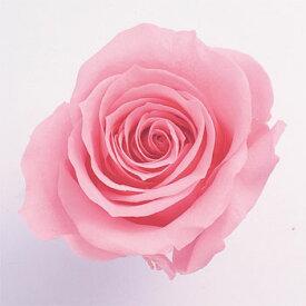 ローズ いずみ約3.5〜4.5cmφ プリンセスピンク (9輪入り) 【プリザーブドフラワー】【プリザーブドローズ】【花資材】【花材】【Preserving】【大地農園】