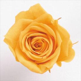 ローズ いずみ約3.5〜4.5cmφ フルティオレンジ (9輪入り) 【プリザーブドフラワー】【プリザーブドローズ】【花資材】【花材】【Preserving】【大地農園】