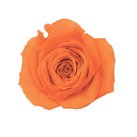 ローズ・いずみ パッションオレンジ 約3.5〜4.5cmφ (9輪入り) 【プリザーブドフラワー】【プリザーブドローズ】【花資材】【花材】【Preserving】【大地農園】