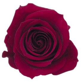 ローズ いずみ約3.5〜4.5cmφ ワインレッド (9輪入り) 【プリザーブドフラワー】【プリザーブドローズ】【花資材】【花材】【Preserving】【大地農園】