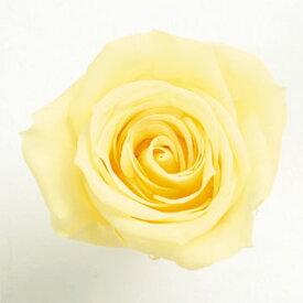 ローズ いずみ約3.5〜4.5cmφ モーニングイエロー (9輪入り) 【プリザーブドフラワー】【プリザーブドローズ】【花資材】【花材】【Preserving】【大地農園】