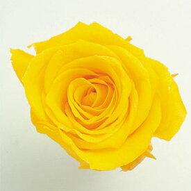 ローズ いずみ約3.5〜4.5cmφ ミモザイエロー (9輪入り) 【プリザーブドフラワー】【プリザーブドローズ】【花資材】【花材】【Preserving】【大地農園】