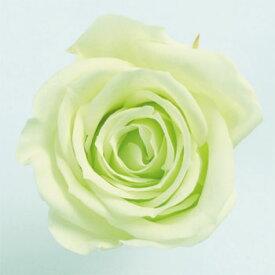ローズ いずみ約3.5〜4.5cmφ フレッシュグリーン (9輪入り) 【プリザーブドフラワー】【プリザーブドローズ】【花資材】【花材】【Preserving】【大地農園】