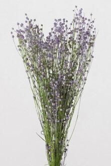 ◎◎ Phosphorus flower mini-purple / green (approximately 20 g)