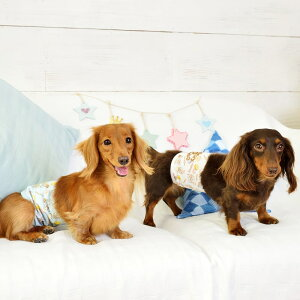 CRAZYBOO/クレイジーブーマカロン柄マナーベルトS/M/L/XLサイズ犬の服/犬服/ドッグウェアマナーグッズ/マナーベルト