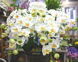 胡蝶蘭 光触媒【造花】k5-1sミディ白5本立て