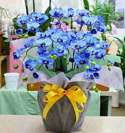 胡蝶蘭 青 光触媒【造花】k5-sミディ「ブルー」5本立て
