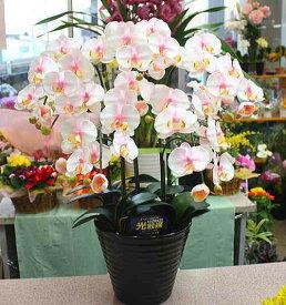 胡蝶蘭 5本立ち 白に淡いピンク【造花】光触媒加工 k5-10 Mサイズ 花 ギフト