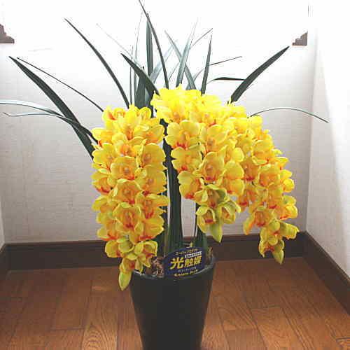 シンピジューム 黄色 3本立ち Mサイズ 光触媒【造花】本物そっくり 花 ギフト