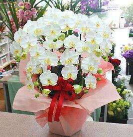 胡蝶蘭 白色 5本立て【造花】光触媒加工 k5-1Mサイズ 花ギフト