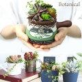 プレゼントにぴったり♪おしゃれなエアプランツや観葉植物のおすすめは?