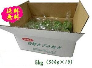 阿波の新鮮カットねぎ5kg(500g×10袋) 送料無料ネギ 葱 薬味ねぎ 徳島県産 産地直送 業務用 冷蔵便