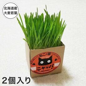 猫草 種 国産 有機栽培 セット 猫 ニャッパ 2個入り