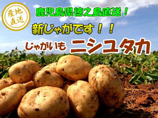ジャガイモ 5kg じゃがいも バレイショ 馬鈴薯 新じゃが ニシユタカ 鹿児島 徳之島