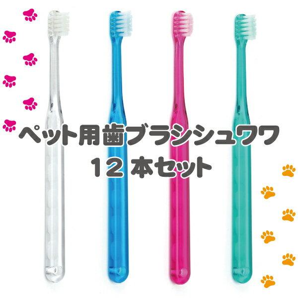 犬用 歯ブラシ / Ci シュワワ / 4色アソート/12本セット【Ciメディカル 歯ブラシ】