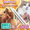 【メール便で送料無料】《代引き不可》【歯石取り】【ヤニ取り】スケーラー(ホータイプ) 愛犬や愛猫の歯石取りに便利…