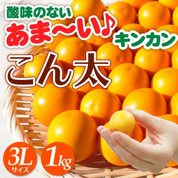 【2月10日頃より出荷予定】 こん太(金柑) 3Lサイズ 1kgセット 数量限定!【送料無料】 | 金柑 きんかん キンカン JAしみず