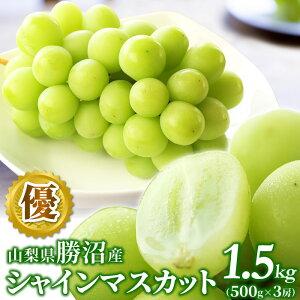 山梨県勝沼産 シャインマスカット 1.5kg(500g×3房入) ハウス栽培 優品 ぶどう ブドウ 葡萄 果物 フルーツ 産地直送 お土産