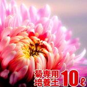 菊の実りの培養土10L大郷屋オリジナルブレンド培養土植物の土